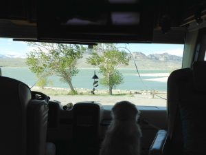 Cessna enjoyed the view from our front window as much as we did. Do you see how the trees are blowing sideways and the lake has white caps on it? It was super windy most of the time we were there.