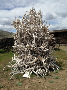 "I love these antler ""trees"" that randomly appear around town or on ranches."