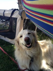 A hammock makes all creatures happy, whether they are in one or under one.