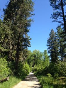 Part of our Rattlesnake trail. It was the perfect place to burn some calories and breathe some fresh air.