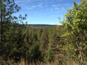 A view from another one of our dog walks on the Spokane River Centennial Trail.